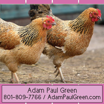 Adam Paul Green successful home business consultantadampaulgreen.com