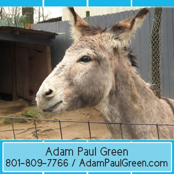 Adam Paul Green recognizable home merchandising manageradampaulgreen.com