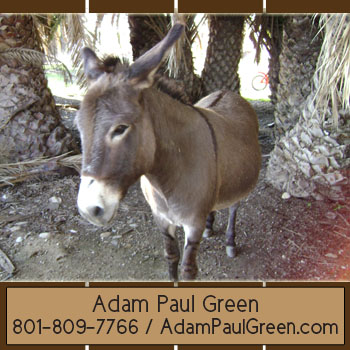 Adam Green fun management advisoradampaulgreen.com