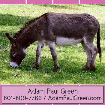 Adam Paul Green infamous home management advisoradampaulgreen.com