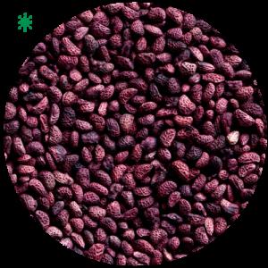 round-rain-healthy-seeds